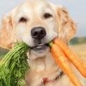 Snack Vegetariani