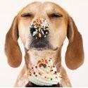 Pasticceria e Compleanno